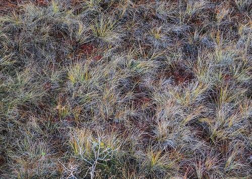 Posté par Eccie  sur 2015-10-26 18:14:15      Tagged:  , paukjärve , estonia , eesti , viro , national , park , kansallispuisto , suo , swamp   …