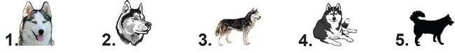 Waterslide Chien Ongle Décalques Set Of 20 – Husky – Vous Choisissez  Price : 1.69  Ends on :   Voir sur eBay   …