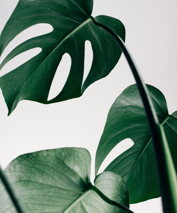 The 7 'It' Plants You Need In Your Home (And How Not To Kill Them) #refinery29 www.refinery29.uk… Source by movhelvoort   …
